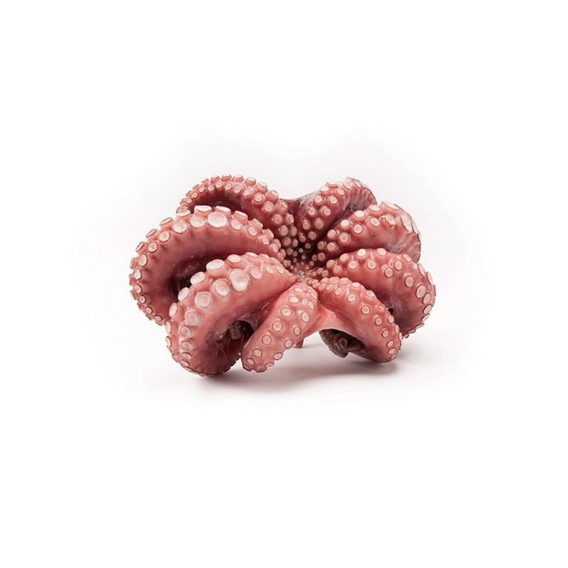 wholesale frozen octopus