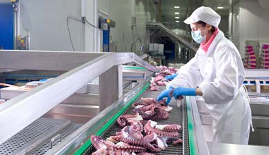 ▷ Frozen Octopus Seafood Wholesale - Discefa®