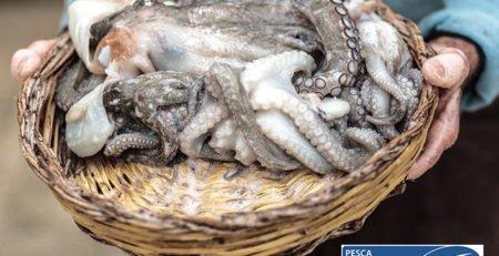 Pesquería de pulpo sostenible MSC Discefa