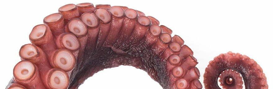 Octopus Representative Discefa
